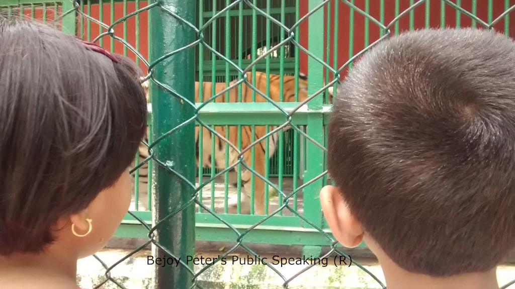 Daniela Stefan Zoo Tiger